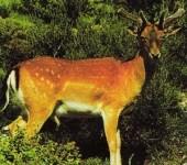 Κόκκινο Βιβλίο Απειλούμενων Ζώων στην Ελλάδα