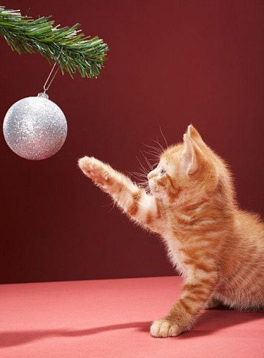 γάτα και χριστουγεννιάτικο στολίδι