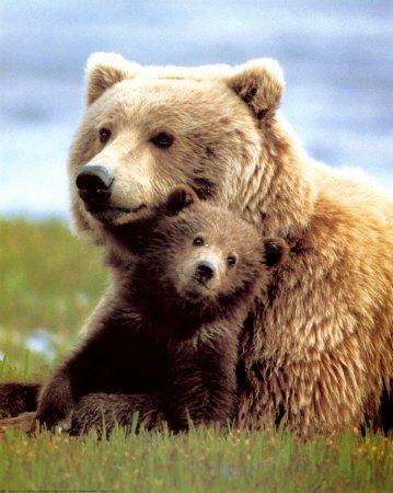 αρκούδα dating ετεροθαλής αδελφός και αδελφή dating