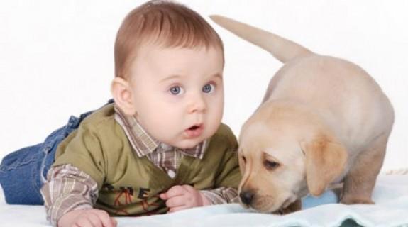Οι σκύλοι προφυλάσσουν τα παιδιά από τις λοιμώξεις