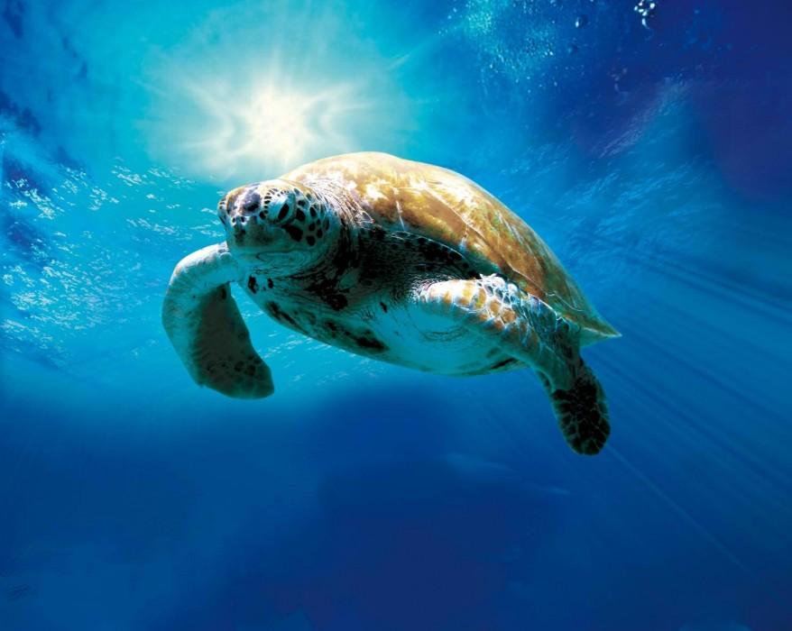 Θαλάσσια χελώνα τραυματισμένη από παραγάδι στον κόλπο του Πόρτο Ράφτη