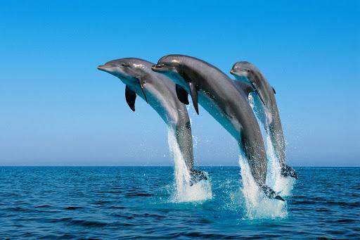 Ένα εκπληκτικό βίντεο: Τα ρινοδέλφινα «ξετρυπώνουν» ψάρια για να τραφούν