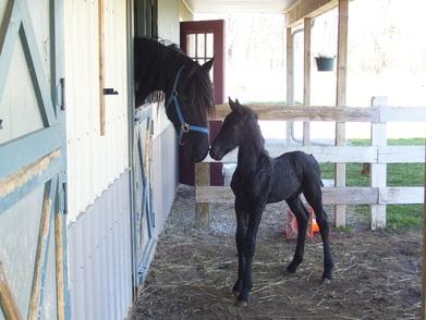 Δείτε ένα άλογο που το «σκάει» και απελευθερώνει και τους φίλους του
