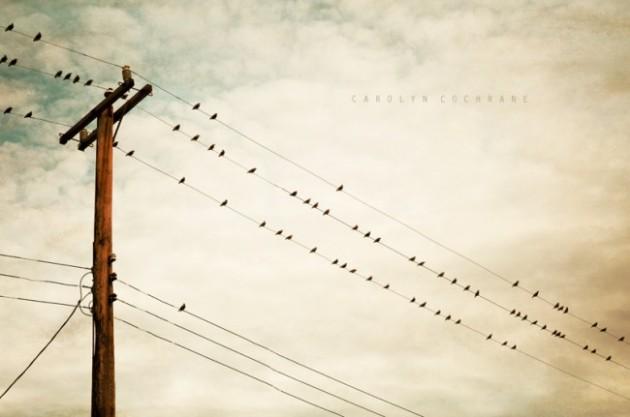 bird-on-wire-photography-beige
