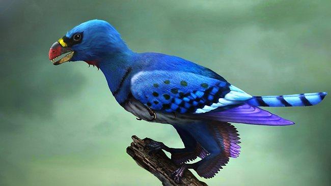 5eb7a91f266287fe10f15ddc_four_winged_bird