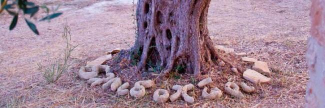 elpidohori_tree