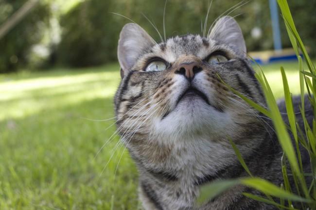 Η άγρια πλευρά της γάτας