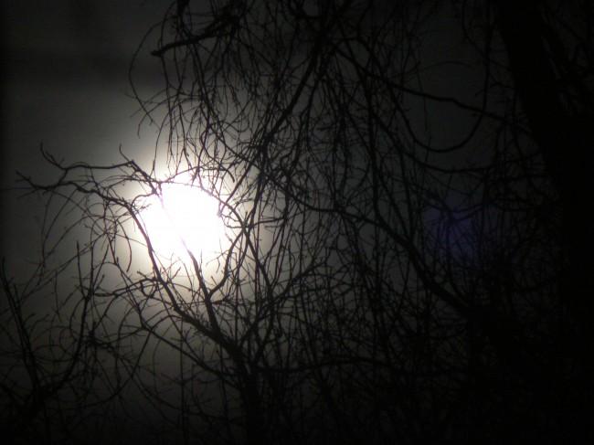 Dark_Moon_Max_Frear_2008