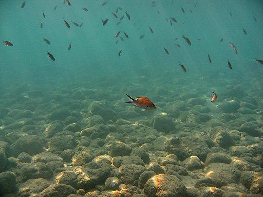 Europe-Mediterranean-coast-fish_540