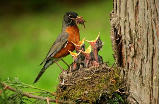 baby-birds_543x355$