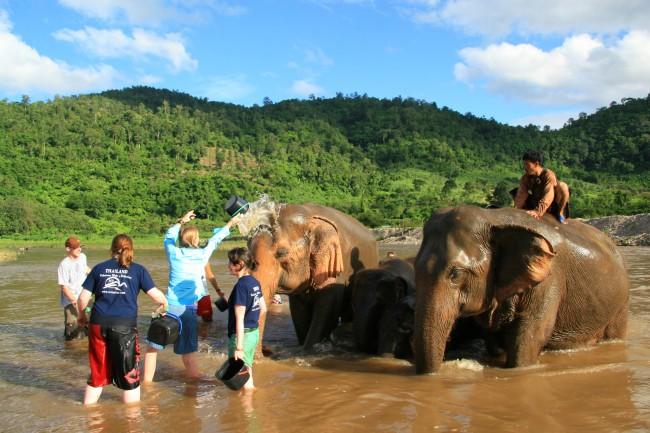 Mud-and-Elephants