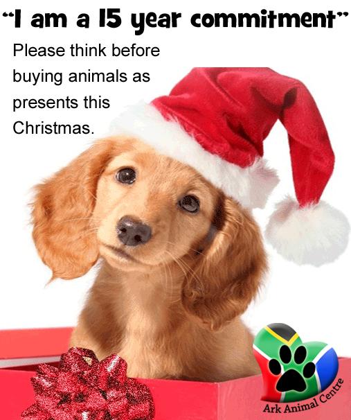 dont-buy-animals-puppies-as-presents-this-christmas-festive-season-ark-animal-centre-plea