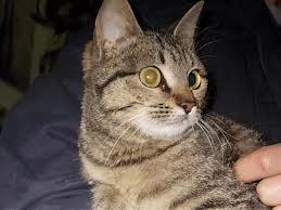 γάτα1
