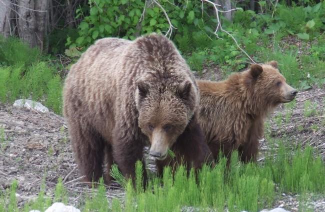 Bears 2