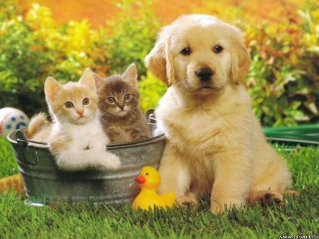 puppy-dog-4