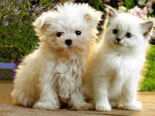 Kittens & Puppies 11_05_ccnan