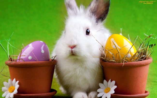 easter-bunny-wallpaper-desktop1