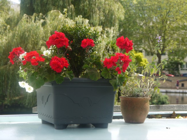 flower-pots-with-red-flowers