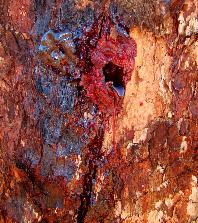 Bloodwood_Bleeding