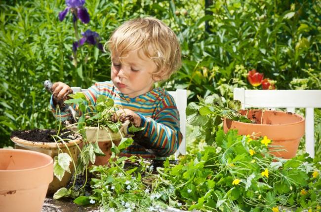 little-boy-gardener