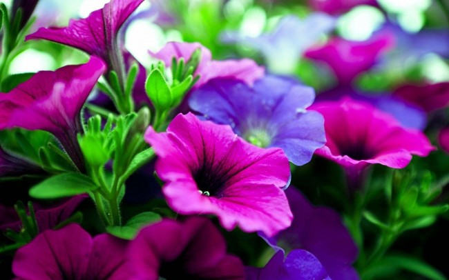 pink-purple-flowers