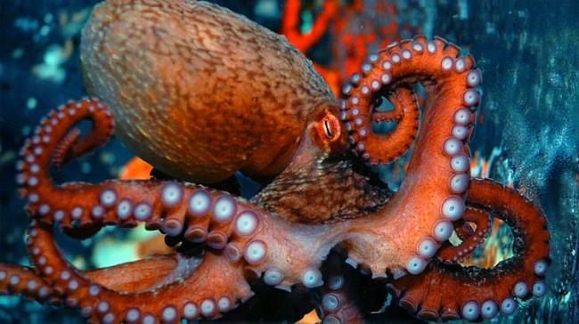 revit-octopus