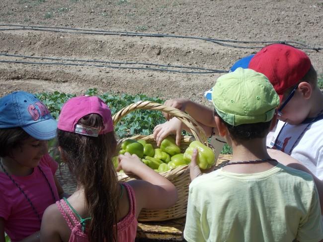 Καλοκαίρι στο Αγρόκτημα_1