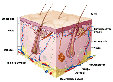 dermatologia-new
