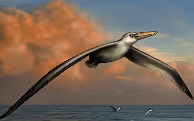 Το μεγαλύτερο πτηνό του κόσμου είχε φτερούγες 7,4 μέτρων και πετούσε με ταχύτητα 60 χλμ!