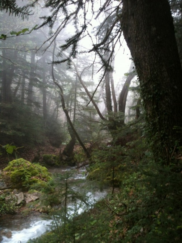 το δάσος τηε Παύλιανης