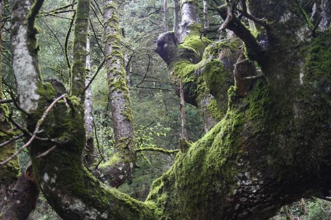 Παύλιανη Φθιώτιδας – Πάρκο αναψυχής