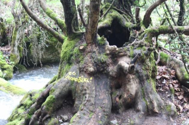 παλιό δέντρο