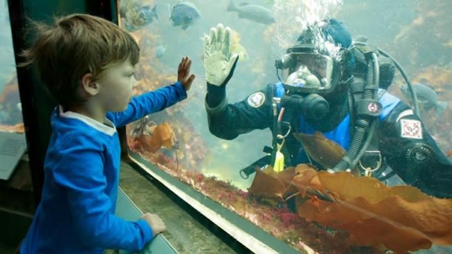boy-diver-kelp-forest