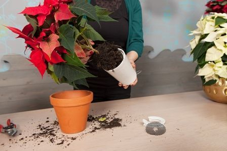 2014-weihnachtssterne-sky-planter-step2small