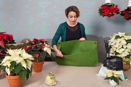 2014-weihnachtssterne-vertical-garden-step1