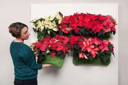 2014-weihnachtssterne-vertical-garden-step4