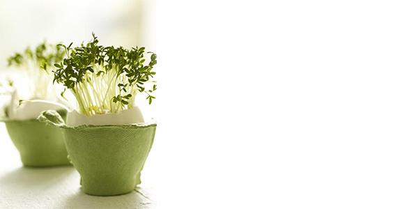 Μικροί κηπουροί σε δράση: Ένα μίνι φυτώριο στο σπίτι, με τσόφλια αυγών!