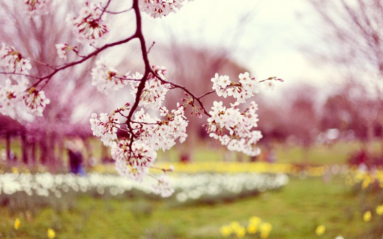 images-of-spring-flowers-and-wallpapers-6