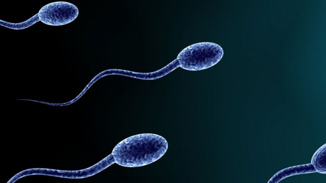 spermstockphoto