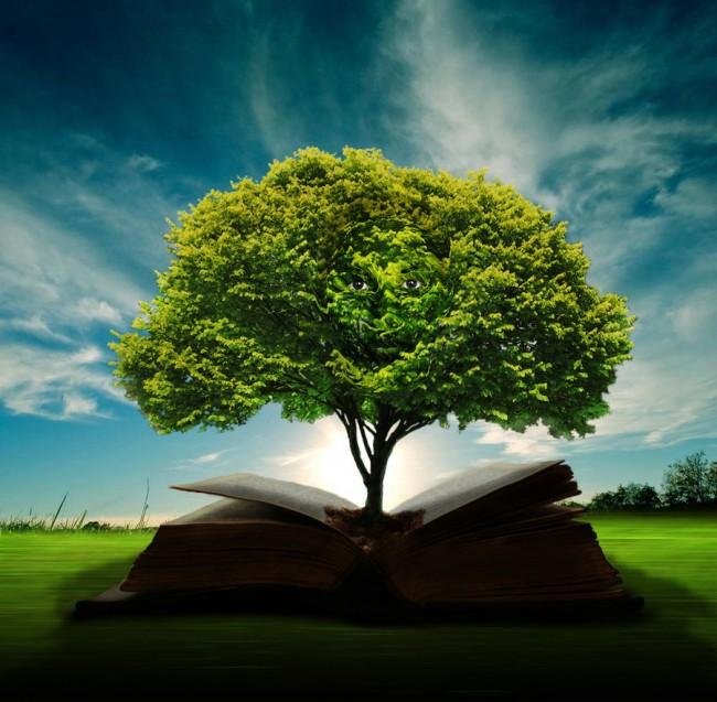 wisdom_tree_by_doug222-d3f0ozt