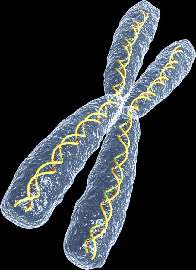 Chromome_DNA_rotated