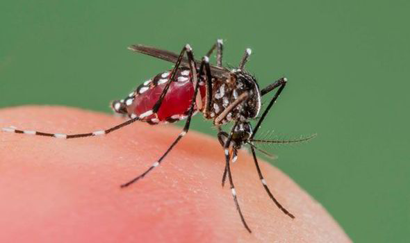 mosquitos-423397