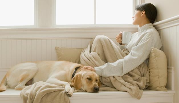 woman-petting-dog-window-628x363