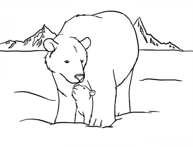 πολική αρκούδα για ζωγραφική