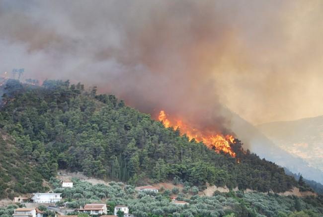 19.08.2011-ΦΩΤΙΑ-ΔΑΣΟΣ