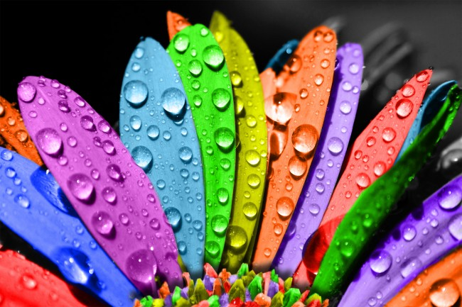 Multicolour-colours-22235185-2362-1575