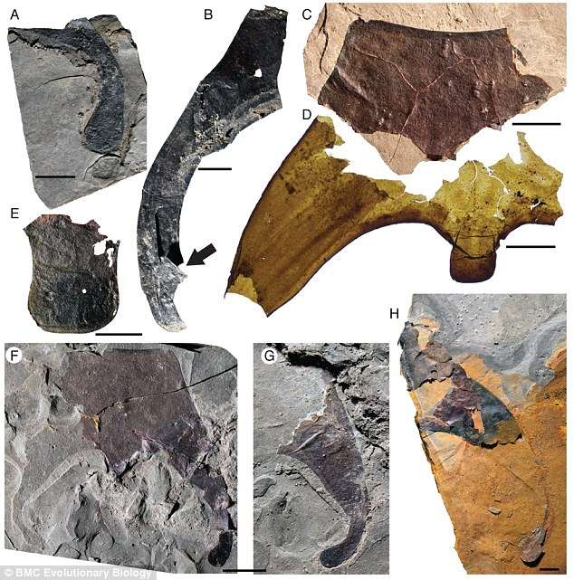 2BD8A0E800000578-3217082-More_than_150_fossil_fragments_selection_pictured_of_the_new_eur-a-42_1441030888314