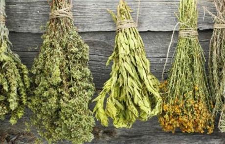 herbs_4