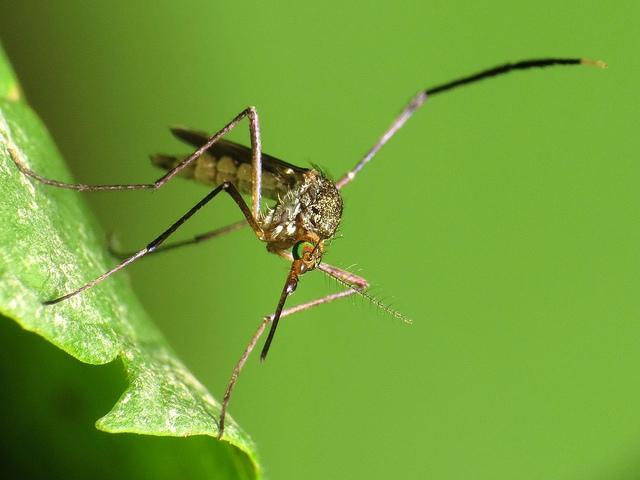 20160119-20160119130013mosquito