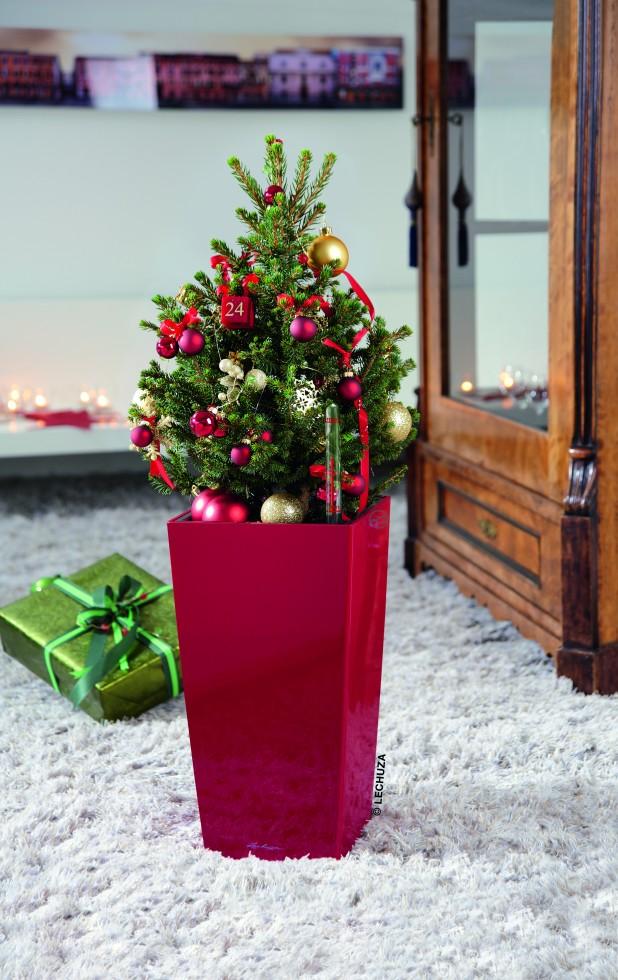 γλάστρα χριστουγέννων